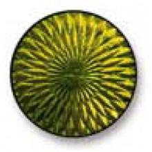 Olive 145