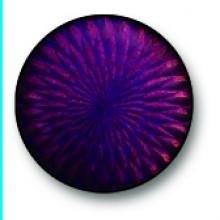 Violet Blue 0150