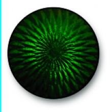 Medium Green 0185