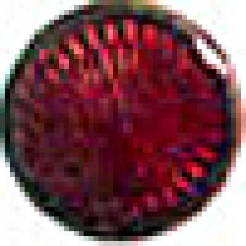 Yakut Kırmızısı 1216