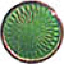Yellowish Green 6039
